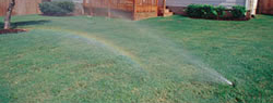 Lawn Castor Oil through sprinkler system